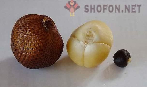 Buah-buahan pelik di dunia